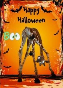 Humour d' Halloween dans belles images du net! 1422634_368443583291032_380902582_n-215x300